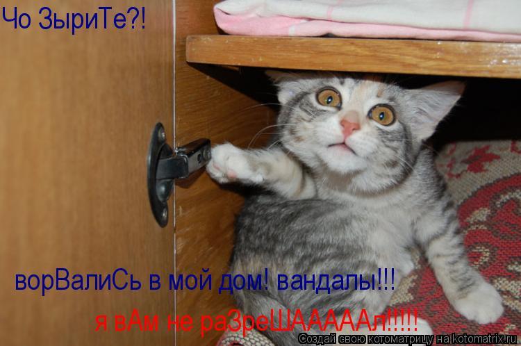 Котоматрица: Чо ЗыриТе?! ворВалиСь в мой дом! вандалы!!! я вАм не раЗреШАААААл!!!!!