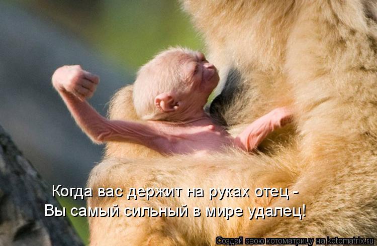 Котоматрица: Когда вас держит на руках отец - Вы самый сильный в мире удалец!