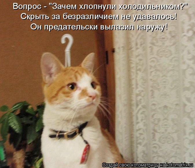 """Котоматрица: Вопрос - """"Зачем хлопнули холодильником?"""" Скрыть за безразличием не удавалось! Он предательски вылазил наружу!"""