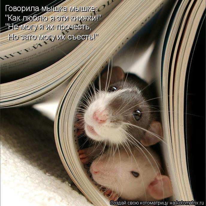 """Котоматрица: Говорила мышка мышке: """"Как люблю я эти книжки!"""" """"Не могу я их прочесть, Но зато могу их съесть!"""""""