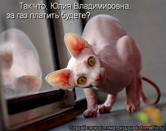 Котоматрица: Так что, Юлия Владимировна, за газ платить будете? за газ платить будете?
