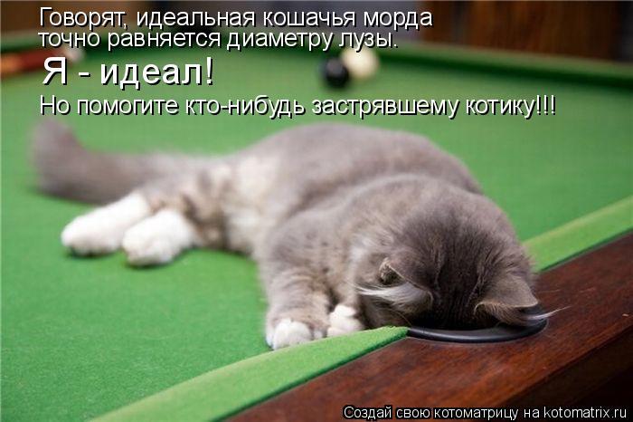 Котоматрица: Говорят, идеальная кошачья морда  точно равняется диаметру лузы. Но помогите кто-нибудь застрявшему котику!!! Я - идеал!