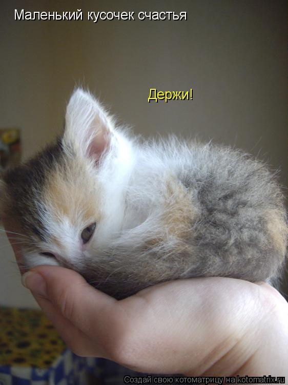 Котоматрица: Маленький кусочек счастья Держи!