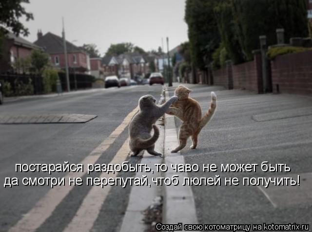Котоматрица: постарайся раздобыть,то чаво не может быть да смотри не перепутай,чтоб люлей не получить!