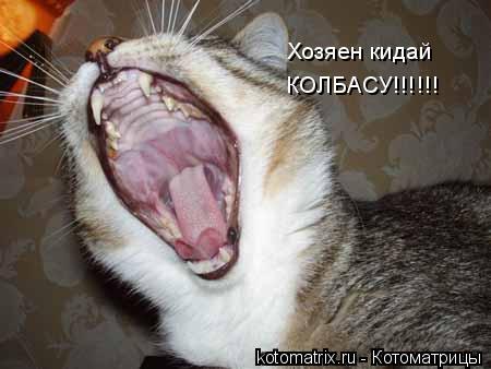 Котоматрица: Хозяен кидай  КОЛБАСУ!!!!!!