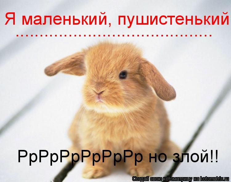 Котоматрица: Я маленький, пушистенький ......................................... РрРрРрРрРрРр но злой!!