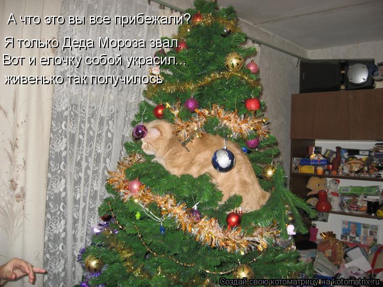 Котоматрица: А что это вы все прибежали? Я только Деда Мороза звал. Вот и елочку собой украсил... живенько так получилось