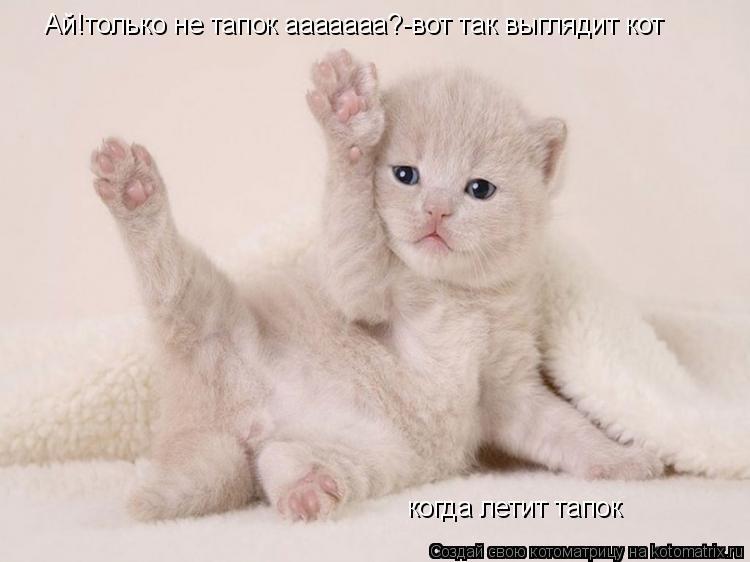 Котоматрица: Ай!только не тапок ааааааа?-вот так выглядит кот  когда летит тапок