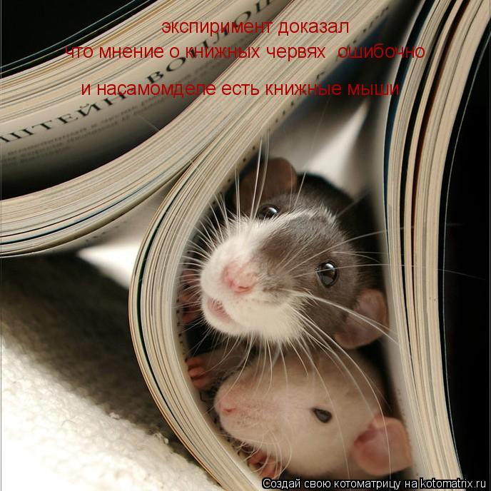 Котоматрица: экспиримент доказал что мнение о книжных червях  ошибочно и насамомделе есть книжные мыши