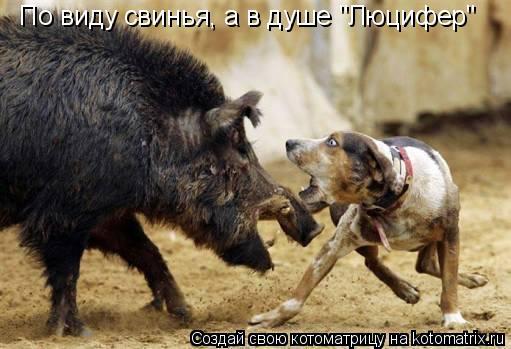 """Котоматрица: По виду свинья, а в душе """"Люцифер"""""""
