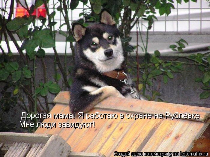 Котоматрица: Дорогая мама! Я работаю в охране на Рублевке. Мне люди завидуют!