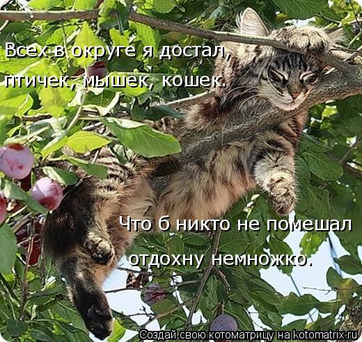 Котоматрица: Всех в округе я достал, птичек, мышек, кошек. Что б никто не помешал отдохну немножко.