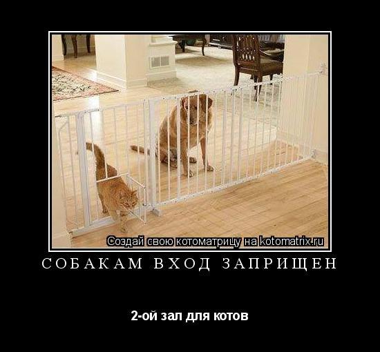 Котоматрица: собакам вход заприщён 2-ой зал для котов