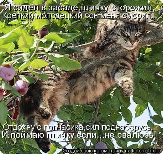 Котоматрица: Я сидел в засаде,птичку сторожил, Крепкий,молодецкий сон меня сморил... Отдохну с полчасика,сил поднаберусь, И поймаю птичку,если...не свалюс