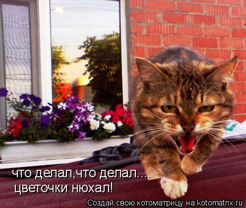 Котоматрица: что делал,что делал.... цветочки нюхал!