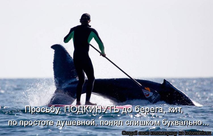 Котоматрица: Просьбу, ПОДКИНУТЬ до берега, кит, по простоте душевной, понял слишком буквально...