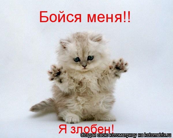 Котоматрица: Бойся меня!! Я злобен!