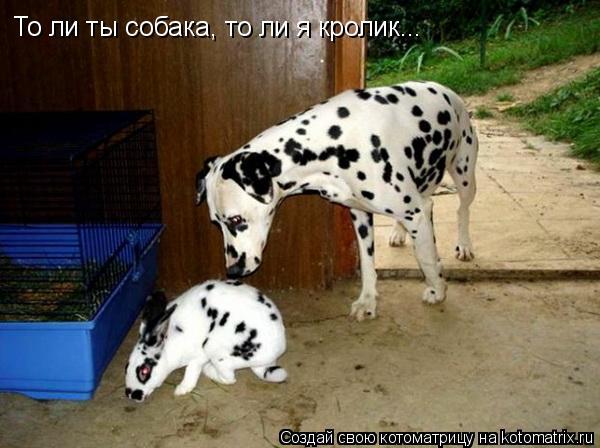 Котоматрица: То ли ты собака, то ли я кролик...