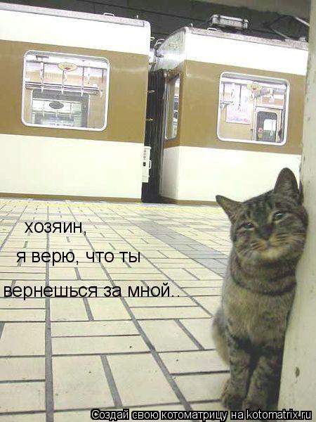 Котоматрица: хозяин, я верю, что ты  вернешься за мной..