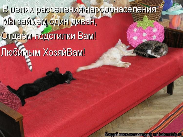 Котоматрица: В целях расселения народонаселения Мы займем один диван, Отдаем подстилки Вам! Любимым ХозяйВам!