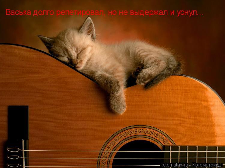 Котоматрица: Васька долго репетировал, но не выдержал и уснул...