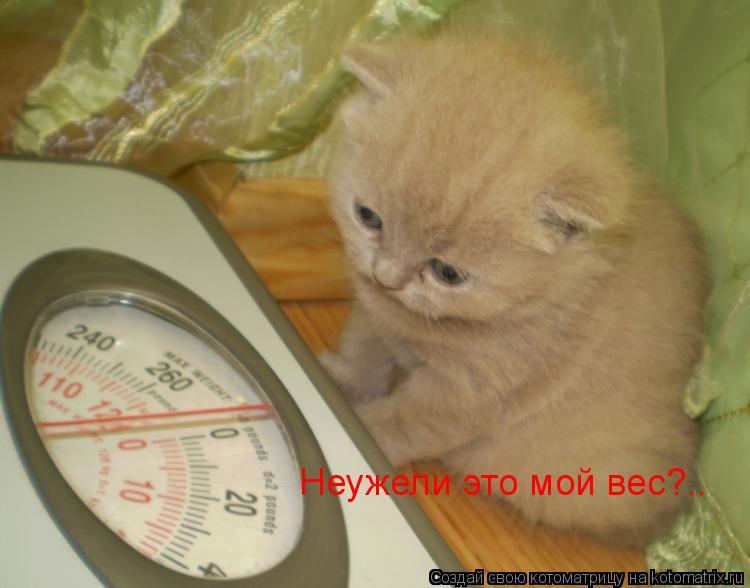 Котоматрица: Неужели это мой вес?..