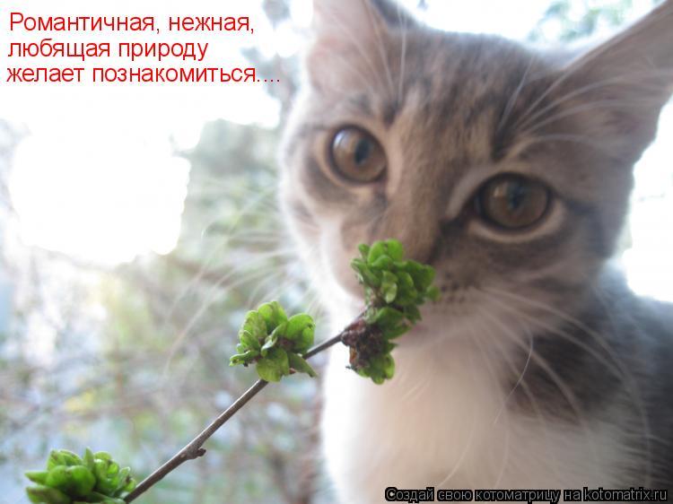 Котоматрица: Романтичная, нежная, любящая природу желает познакомиться....
