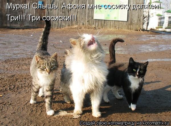 Котоматрица: Мурка! Слышь, Афоня мне сосиску должен! Три!!! Три сосиски!!!
