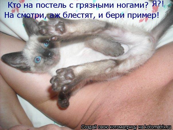 Котоматрица: Кто на постель с грязными ногами?  На смотри, аж блестят, и бери пример! Я?!