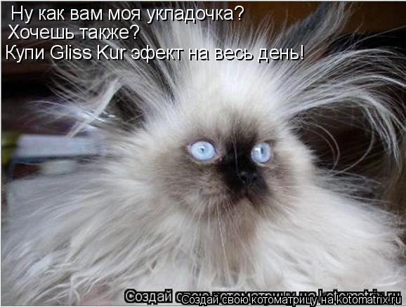 Котоматрица: Ну как вам моя укладочка? Хочешь также? Купи Gliss Kur эфект на весь день!