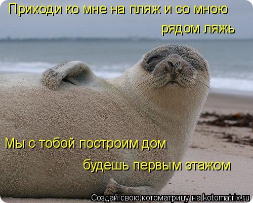 Котоматрица: Приходи ко мне на пляж и со мною рядом ляжь Мы с тобой построим дом будешь первым этажом