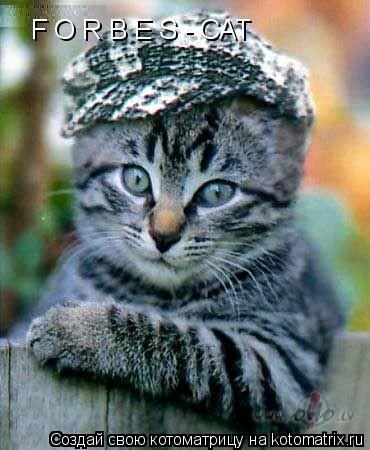 Котоматрица: F O R B E S - CAT