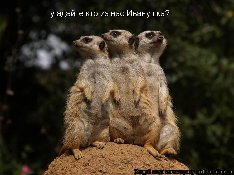 Котоматрица: угадайте кто из нас Иванушка?