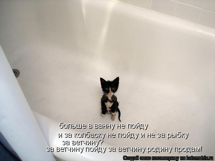 Котоматрица: больше в ванну не пойду и за колбаску не пойду и не за рыбку за ветчину?   за ветчину пойду за ветчину родину продам!