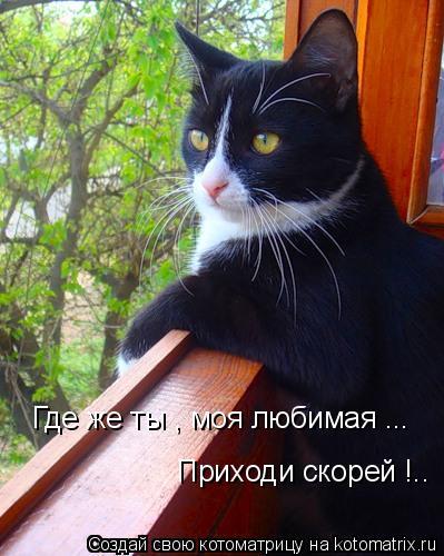 ты любимой мой: