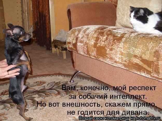 Котоматрица: Вам, конечно, мой респект за собачий интеллект. Но вот внешность, скажем прямо, не годится для дивана.