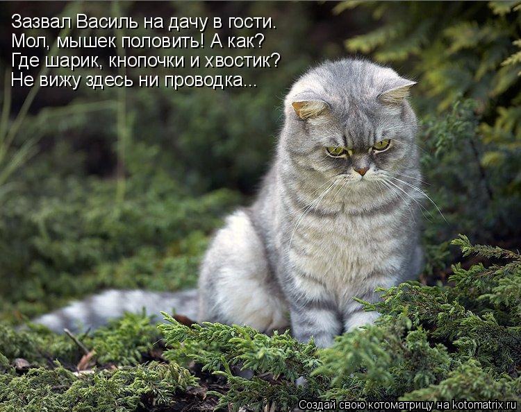 Котоматрица: Зазвал Василь на дачу в гости. Мол, мышек половить! А как? Где шарик, кнопочки и хвостик? Не вижу здесь ни проводка...