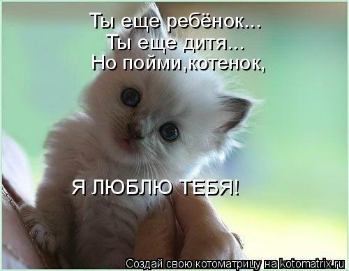 378166 демотиваторыру люблю тебя - мой котёнок!