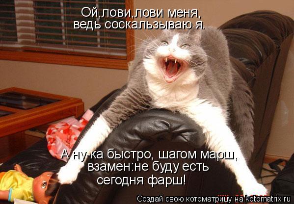 Котоматрица: Ой,лови,лови меня, ведь соскальзываю я. А ну-ка быстро, шагом марш, взамен:не буду есть сегодня фарш!
