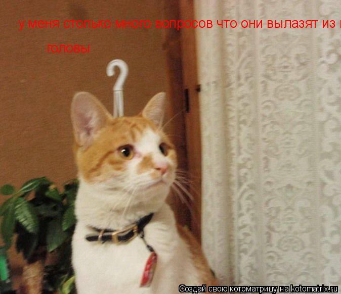 Котоматрица: у меня столько много вопросов что они вылазят из головы головы