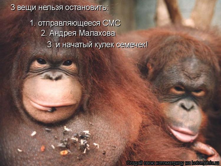 Котоматрица: 3 вещи нельзя остановить: 1. отправляющееся СМС 2. Андрея Малахова 3. и начатый кулек семечек!