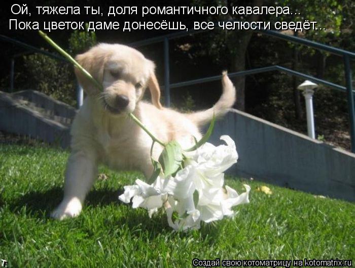 Котоматрица: Ой, тяжела ты, доля романтичного кавалера... Пока цветок даме донесёшь, все челюсти сведёт...