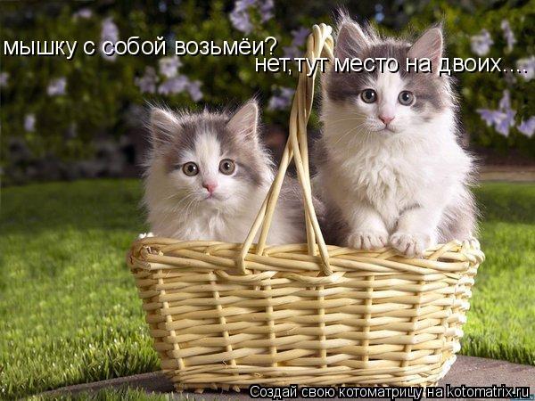 Котоматрица: мышку с собой возьмёи? нет,тут место на двоих....
