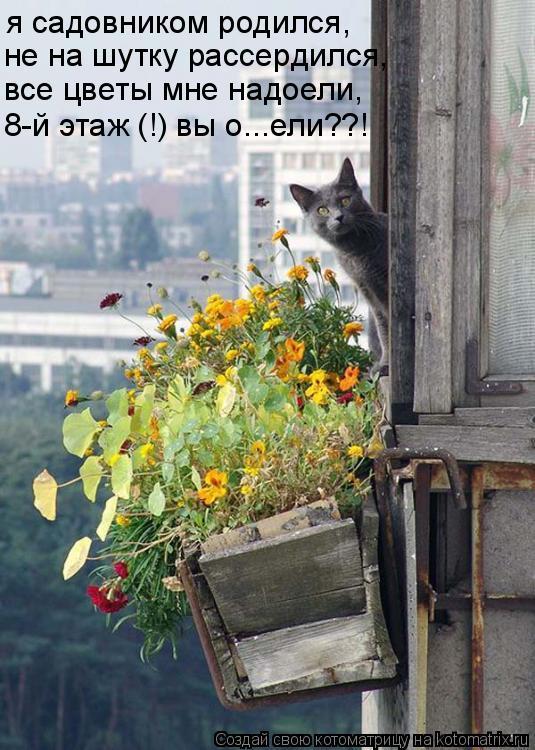 Котоматрица: я садовником родился, не на шутку рассердился, все цветы мне надоели, 8-й этаж (!) вы о...ели??!