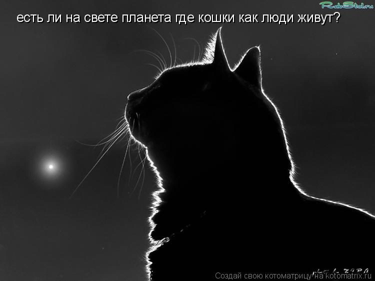 Котоматрица: есть ли на свете планета где кошки как люди живут?