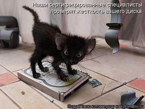 Котоматрица: Наши сертифицированные специалисты проверят жесткость вашего диска