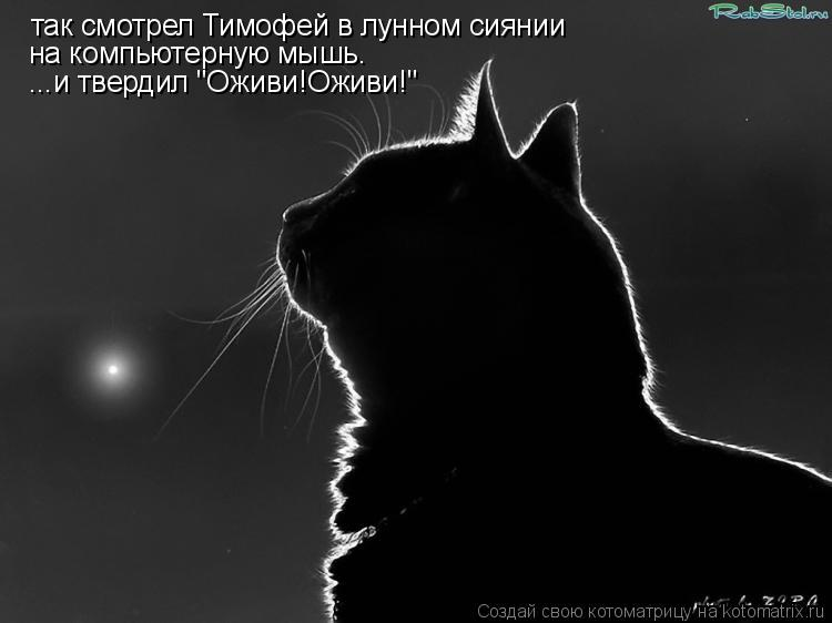 """Котоматрица: так смотрел Тимофей в лунном сиянии на компьютерную мышь. ...и твердил """"Оживи!Оживи!"""""""