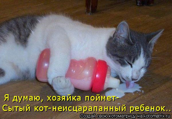 Котоматрица: Я думаю, хозяйка поймет- Сытый кот-неисцарапанный ребенок...