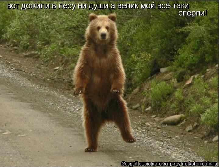 Котоматрица: вот дожили:в лесу ни души,а велик мой всё-таки сперли!