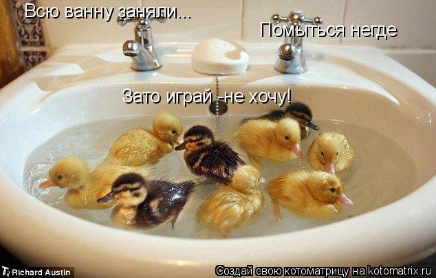 Котоматрица: Всю ванну заняли... Помыться негде Зато играй -не хочу!